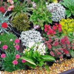 Association des plantes vivaces, le guide